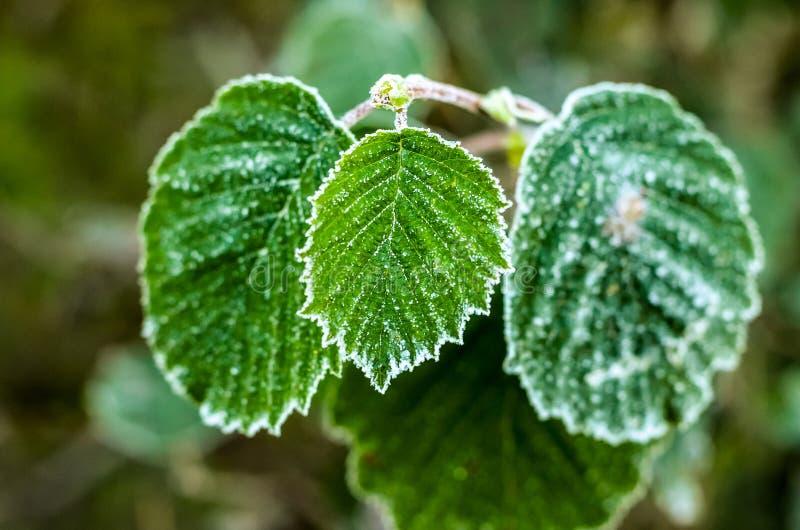 Usines le matin couvert de dégel image stock