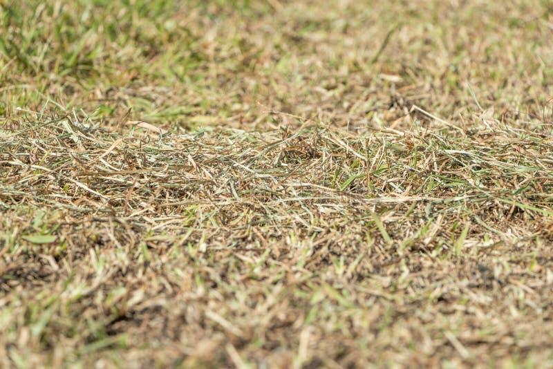 Usines mortes et herbe de photo d'actions dues à la sécheresse 2 d'été image libre de droits