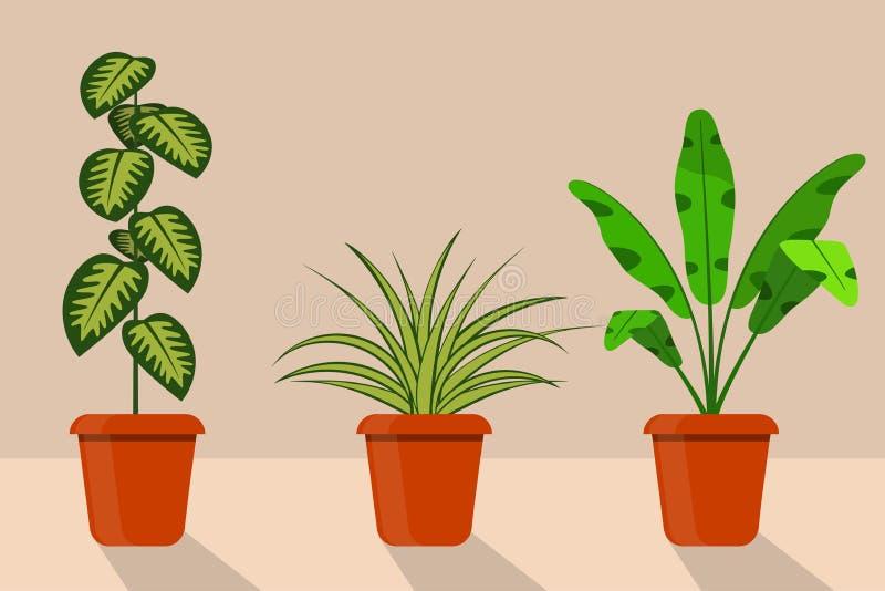 Usines plates de pièce de style dans des pots, illustration Chlorophytum, dieffenbachia illustration stock