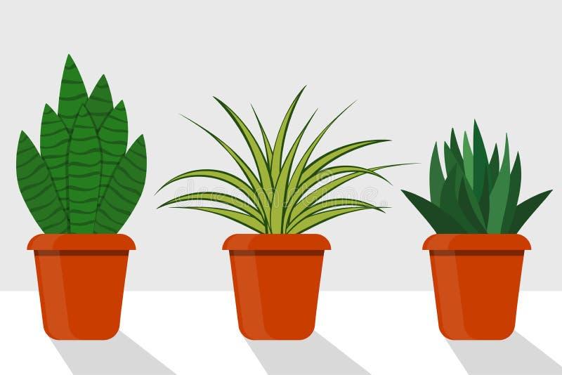 Usines plates de pièce de style dans des pots, illustration Chlorophytum, sansevieriya illustration stock