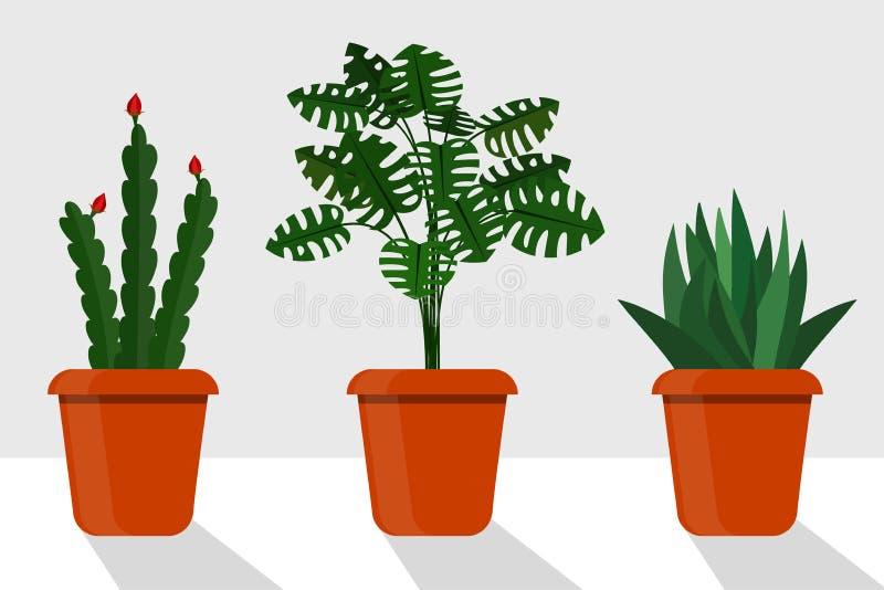 Usines plates de pièce de style dans des pots, illustration Disocactus, monstera, sansevieriya illustration stock