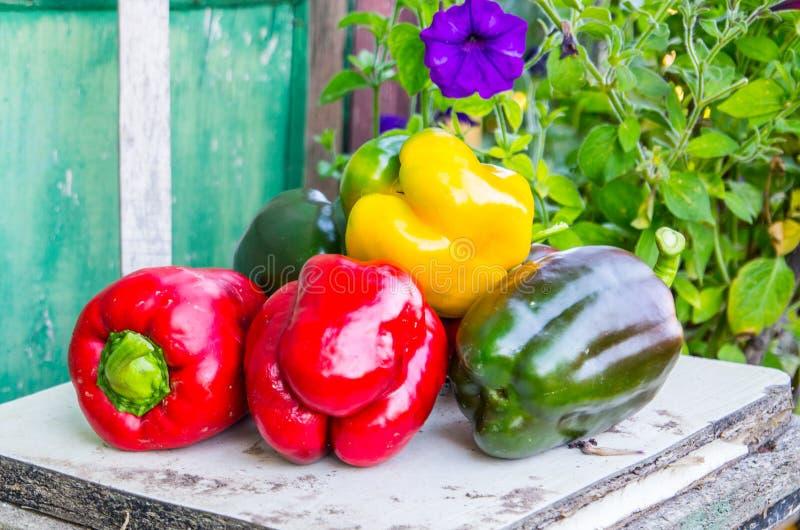 Usines rouges, jaunes et de poivrons verts photographie stock