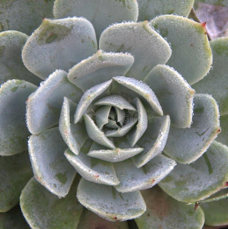 Usines succulentes. photos stock