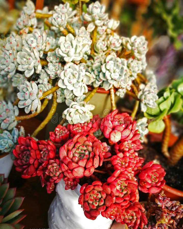 Usines succulentes de contraste de couleur photo stock