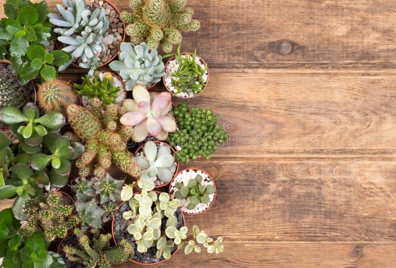Usines succulentes mignonnes sur le fond en bois images stock