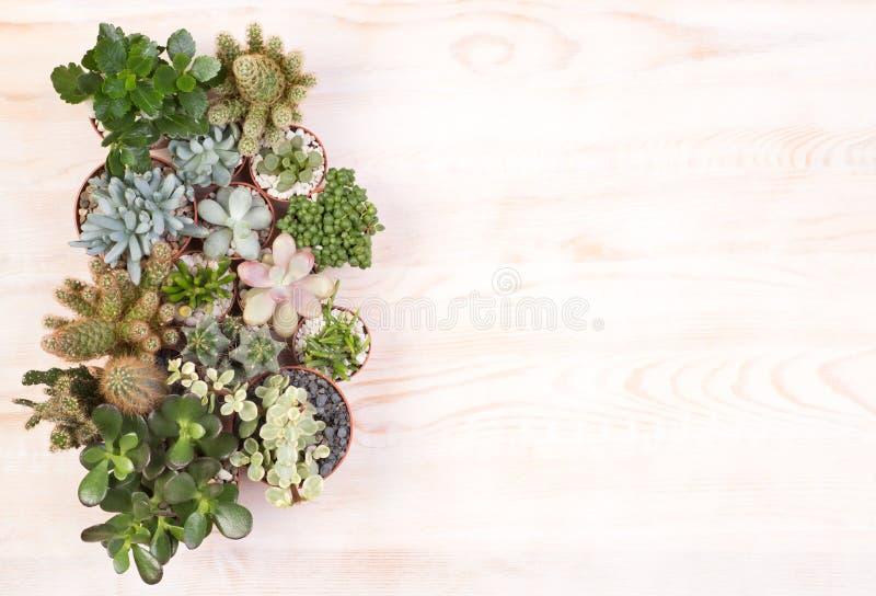 Usines succulentes mignonnes sur le fond en bois avec l'espace de copie photographie stock libre de droits