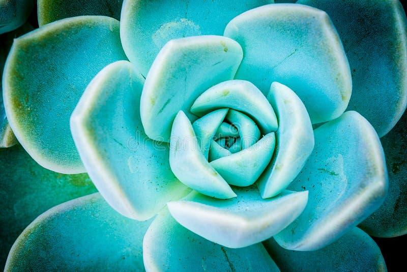 Usines succulentes miniatures images libres de droits