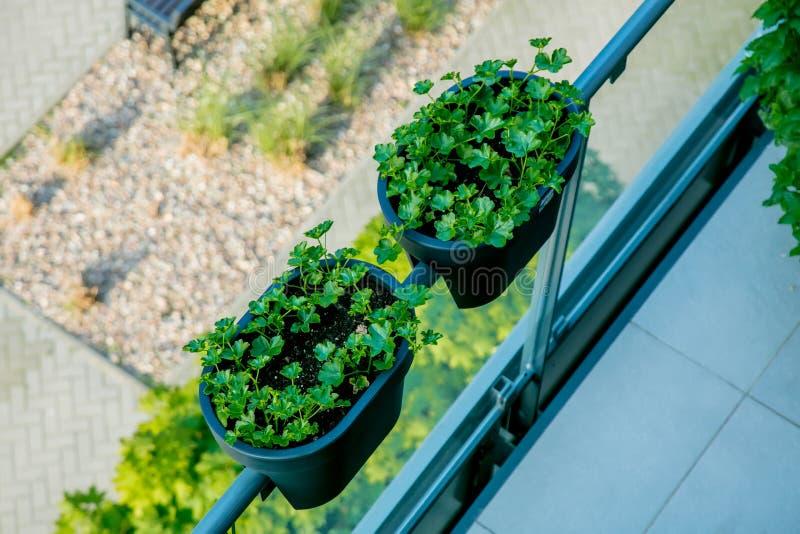 Usines sur le balcon de l'appartement de grenier photos libres de droits