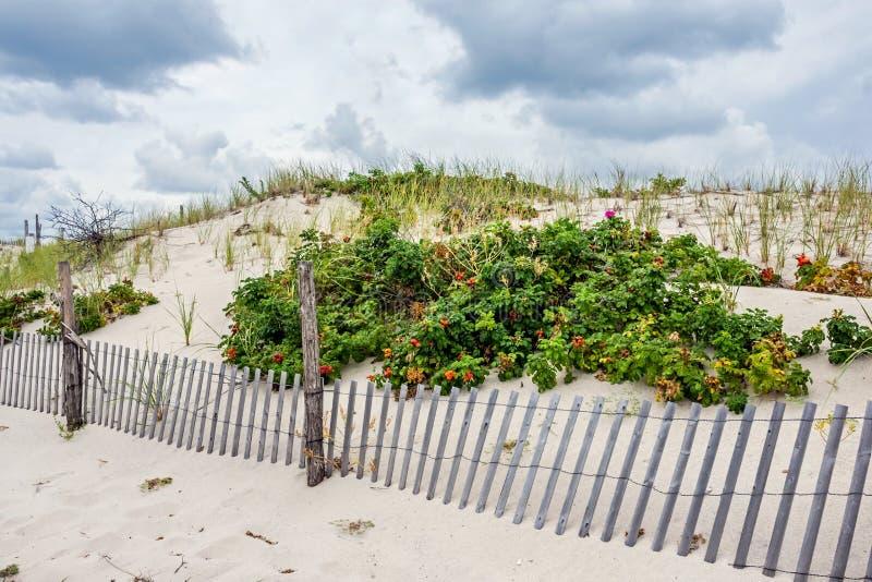 Usines sur les dunes de sable photos stock