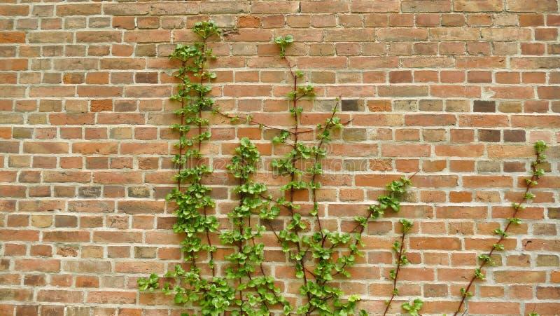 Usines sur un mur de briques images stock