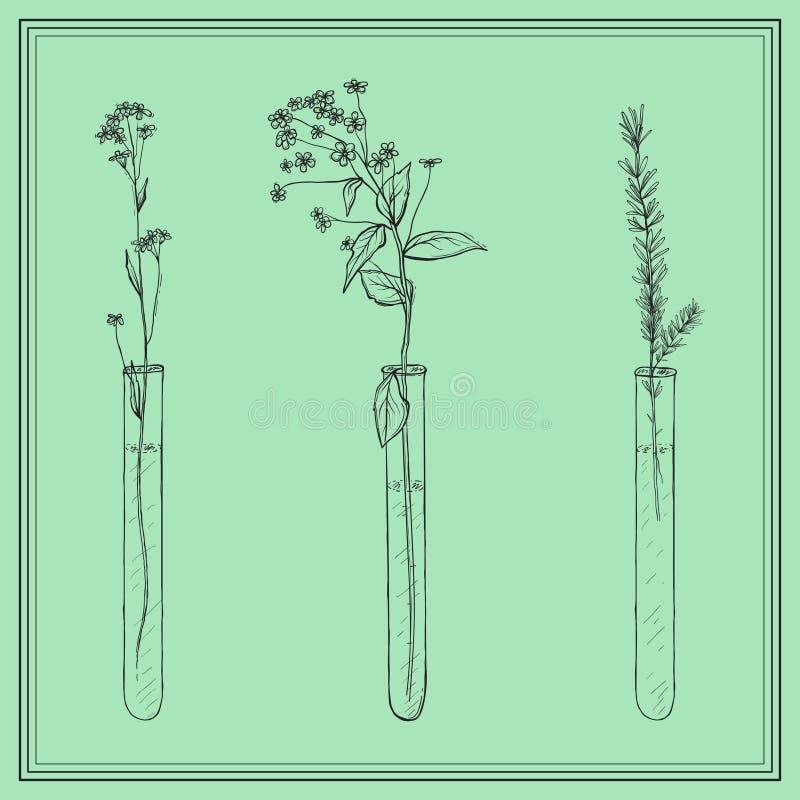 Usines tirées par la main de lavande, fleurs in vitro, fiole, dans le cadre illustration libre de droits