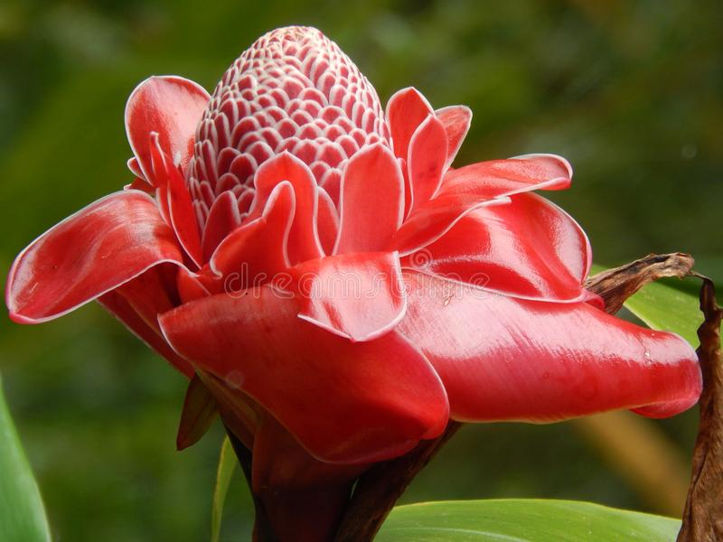 Usines uniques sur la grande île d'Hawaï photographie stock