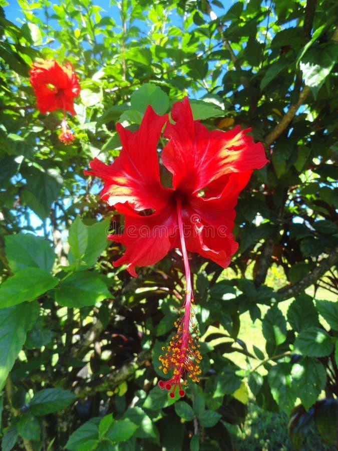 Usines uniques sur la grande île d'Hawaï images libres de droits