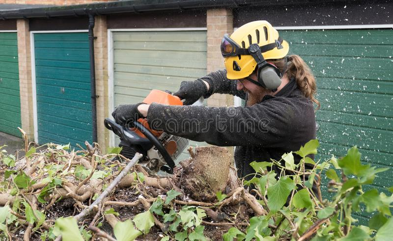 Using a chainsaw on a tree royalty free stock photos