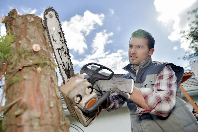 Using chainsaw to cut tree down. Adults stock photo