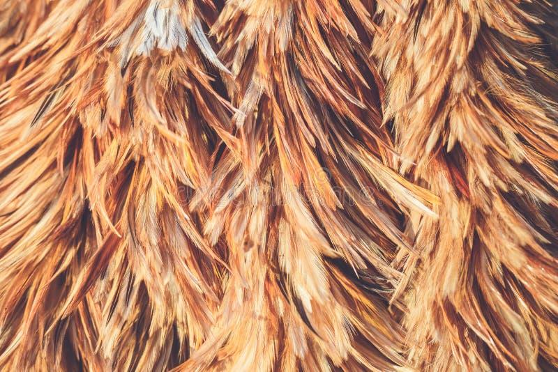 Uso de la textura del plumero de la pluma para el fondo fotos de archivo
