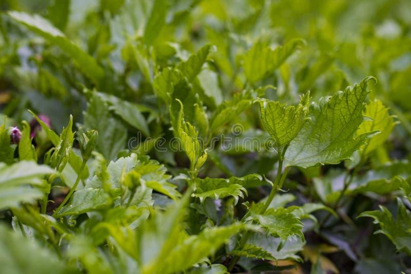 Uso de las hojas del verde como fondo fotografía de archivo libre de regalías