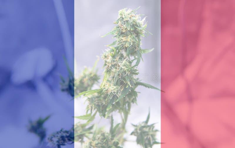 Uso del cáñamo de Nmedicinal en Francia para recreativo Noticias del cáñamo de Francia en 2019 fotografía de archivo libre de regalías
