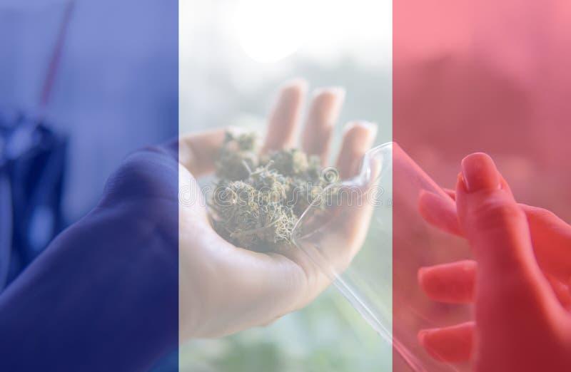 Uso del cáñamo de Nmedicinal en Francia para recreativo Noticias del cáñamo de Francia en 2019 fotos de archivo libres de regalías