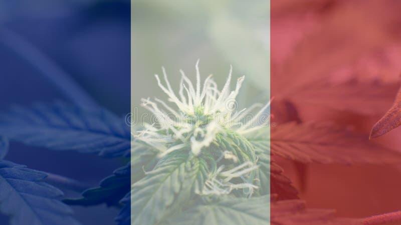 Uso del cáñamo de Nmedicinal en Francia para recreativo Noticias del cáñamo de Francia en 2019 imágenes de archivo libres de regalías