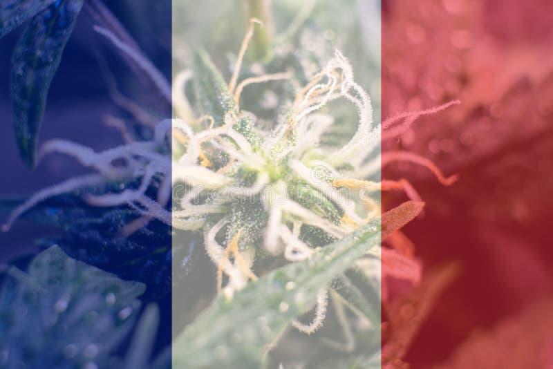 Uso del cáñamo de Nmedicinal en Francia para recreativo Noticias del cáñamo de Francia en 2019 imagen de archivo libre de regalías
