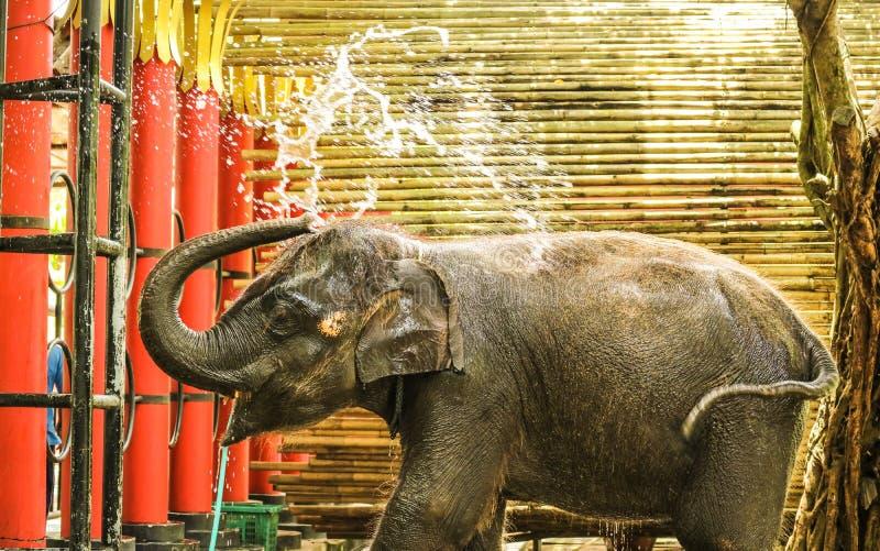 uso del elefante del bebé su agua del chapoteo del tronco durante el baño en el parque zoológico fotos de archivo
