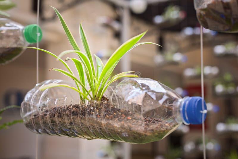 Uso di plastica vuoto della bottiglia come contenitore per la coltura della pianta, recyc fotografia stock libera da diritti