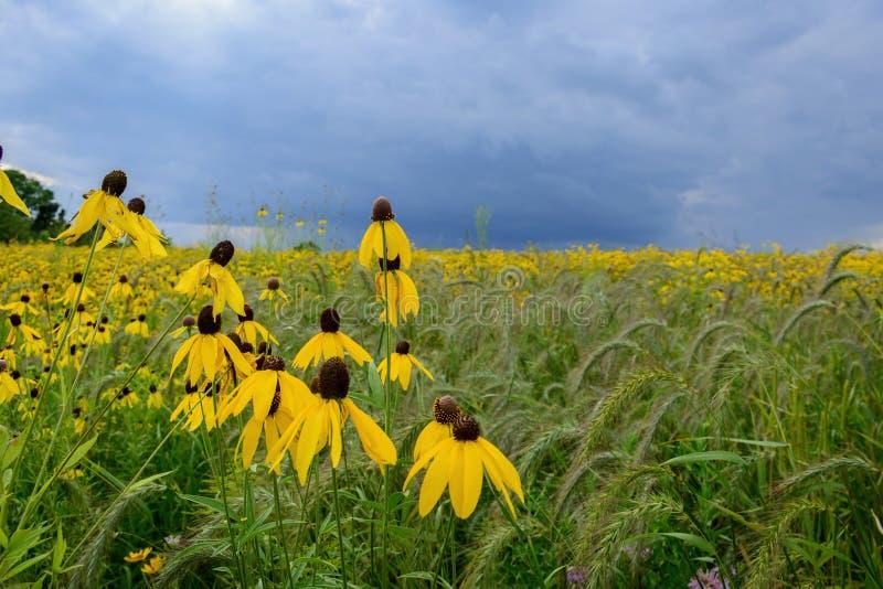 uspokaja przed burzą w polu wildflowers fotografia stock
