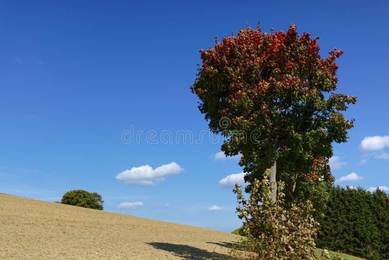 Usseln,德国-与五颜六色绿色和红色的树在早期的秋天在背景中离开与被犁的领域和明白蓝天 免版税库存图片