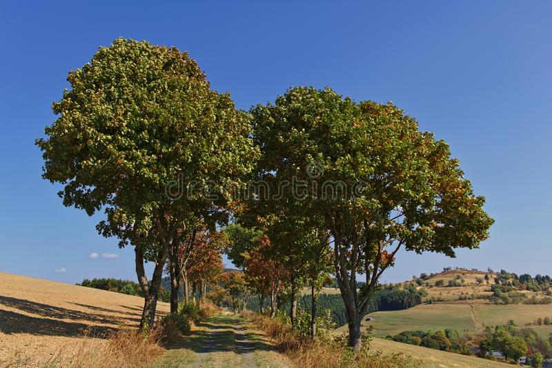 Usseln, Germany - Tree-lined country lane in autumn with rolling hills and blue sky in the background royalty free stock photos