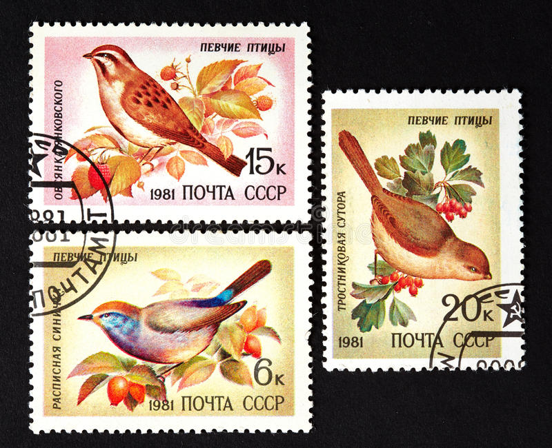 USSR - CIRCA 1981: a series of stamps printed in USSR, shows song birds, CIRCA 1981. USSR - CIRCA 1981: a series of stamps printed in USSR, shows song birds stock photos