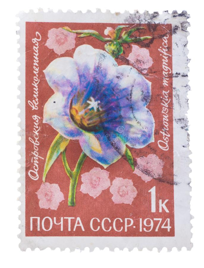 USSR - CIRCA 1974: A stamp printed in the , shows flora li. USSR - CIRCA 1974: A stamp printed in the USSR, shows a flora life, the flower, circa 1974 stock photos