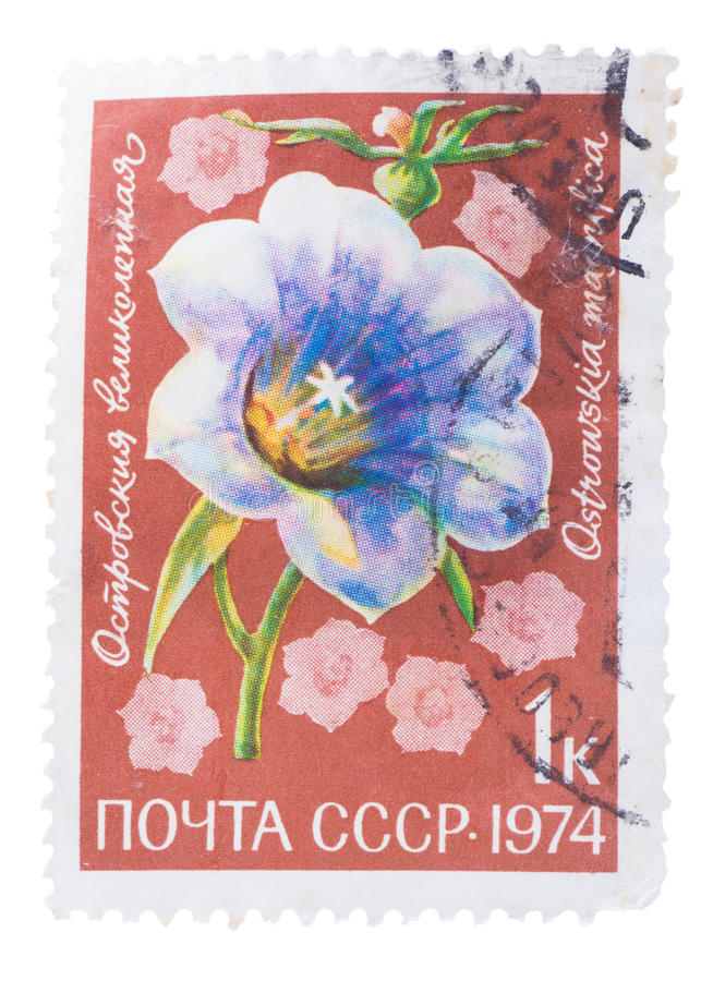 USSR - CIRCA 1974: A stamp printed in the , shows flora li. USSR - CIRCA 1974: A stamp printed in the USSR, shows a flora life, the flower, circa 1974 royalty free stock images