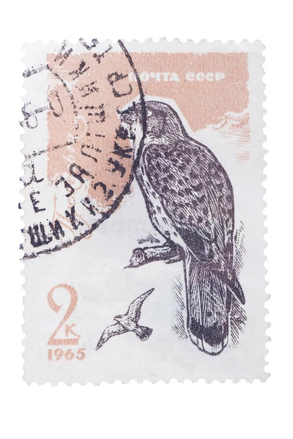 USSR - CIRCA 1965: a stamp printed by shows kestrel, series stock image