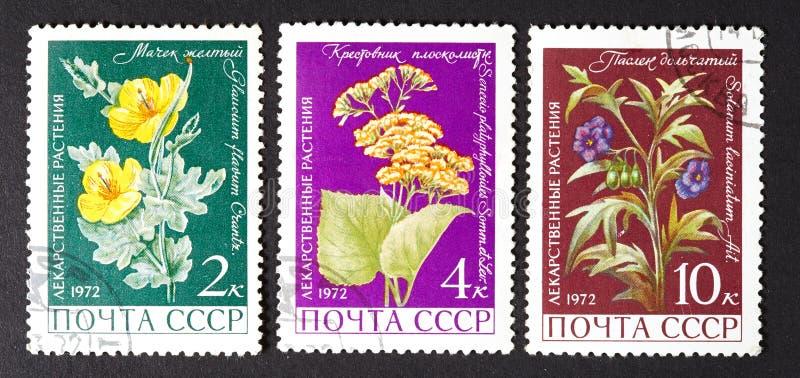 USSR - OKOŁO 1979: serie znaczki drukujący w USSR, przedstawienie lecznicze rośliny OKOŁO 1979, fotografia royalty free