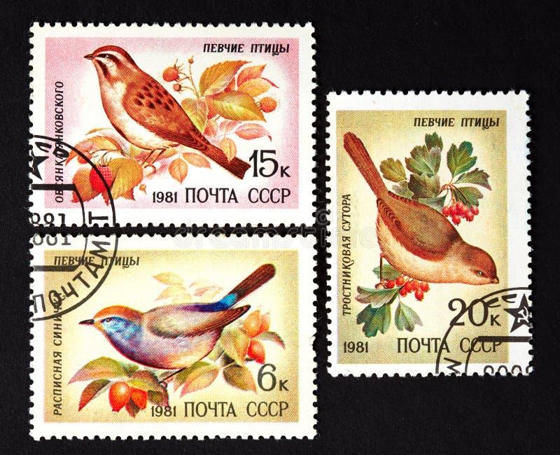 USSR - OKOŁO 1981: serie znaczki drukujący w USSR, przedstawienie pieśniowi ptaki OKOŁO 1981, zdjęcia stock