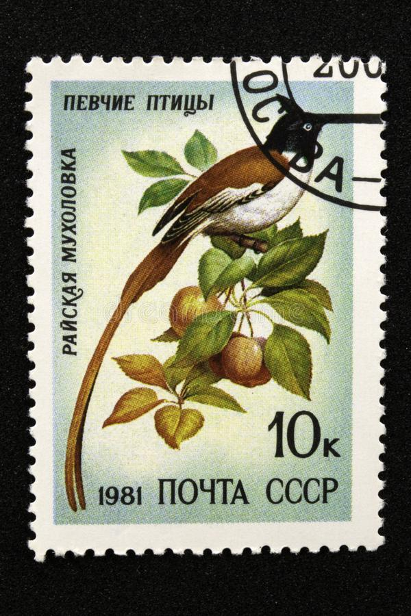The USSR postage stamp, series - Songbirds, 1981. Paradise Flycatcher Terpsiphone paradisi stock images