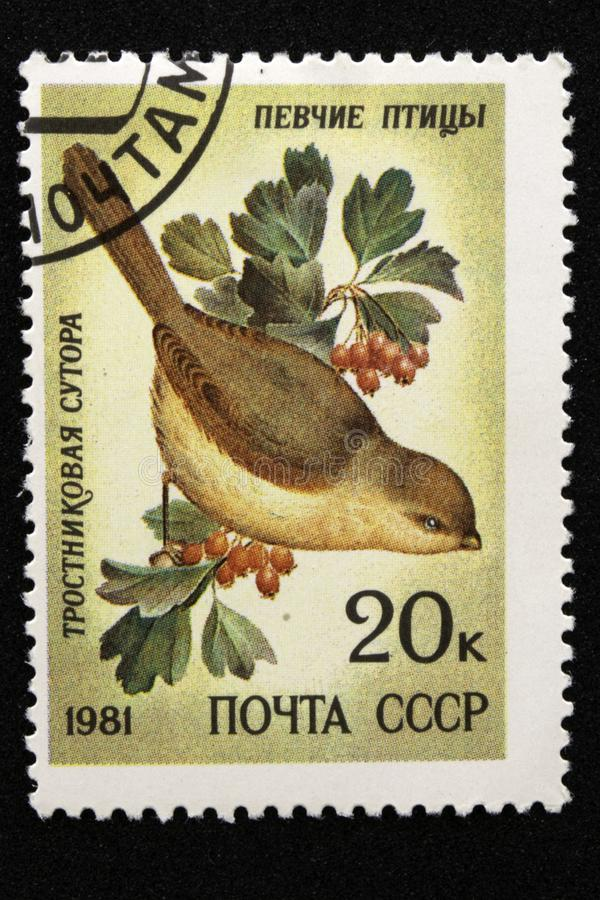 The USSR postage stamp, series - Songbirds, 1981. Reed Cane Paradoxornis heudei stock photo
