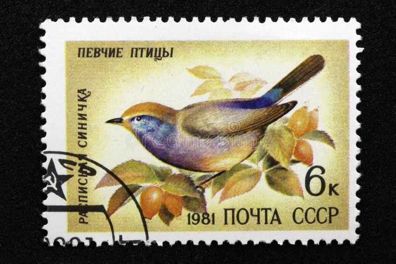 The USSR postage stamp, series - Songbirds, 1981. Painted Tit Leptopoecile sophiae stock images