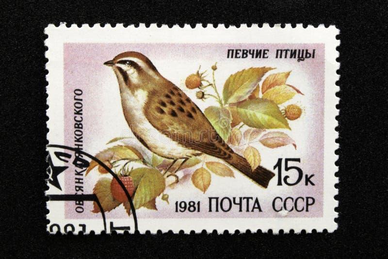 The USSR postage stamp, series - Songbirds, 1981. Yankovsky Porridge Emberiza jankowskii royalty free stock image