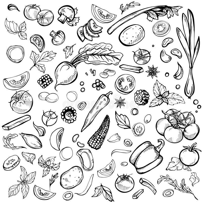 ustaleni różnorodni warzywa ilustracji