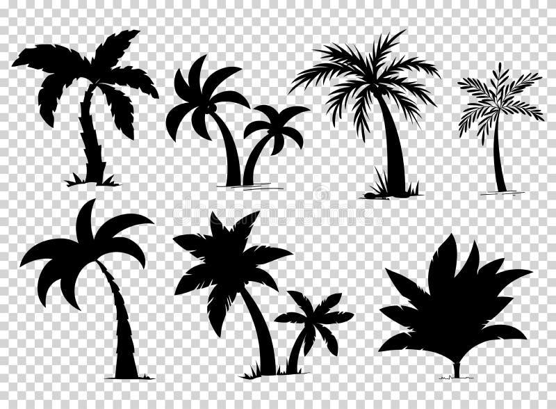 Ustaleni tropikalni drzewka palmowe z liści, dojrzałych i młodych roślinami, czarne sylwetki odizolowywać na białym tle wektor royalty ilustracja