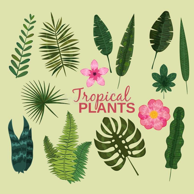 Ustaleni tropikalni liście zasadzają wektorowej zwrotnika liścia ulistnienia palmy, bananowego drzewa w dżungli egzotycznym monst royalty ilustracja