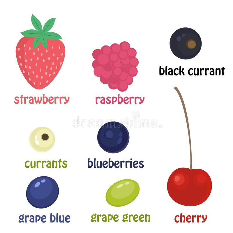 ustalenie jagód Wektorowe kreskówek jagody odizolowywać na białym tle Wiśnie, malinki, winogrona, czarne jagody, rodzynki ilustracja wektor