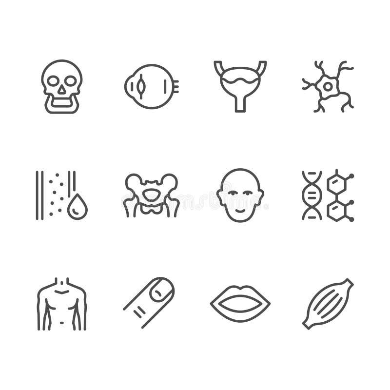 Ustalone kreskowe ikony ludzcy organy royalty ilustracja