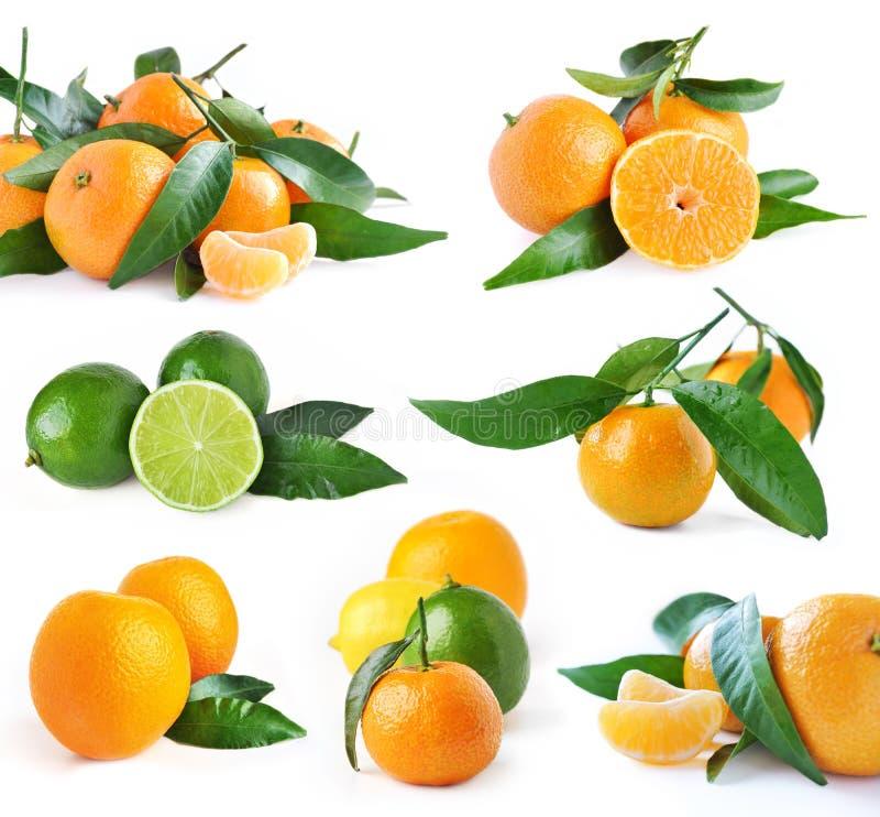ustawiać wapno pomarańcze zdjęcie stock