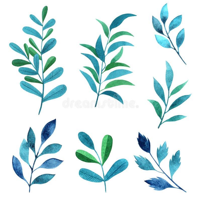 Ustawia akwarela elementy - ziele, liść zdjęcie royalty free