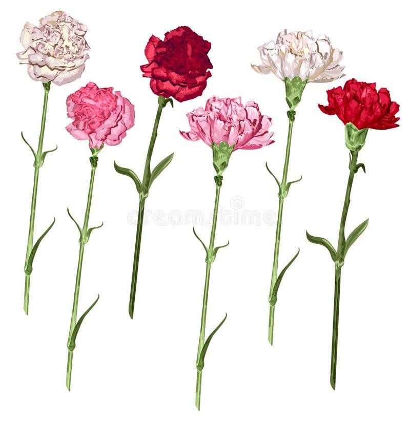 Ustawia goździków kwiaty Bielu, menchii i czerwieni goździk, ilustracja wektor