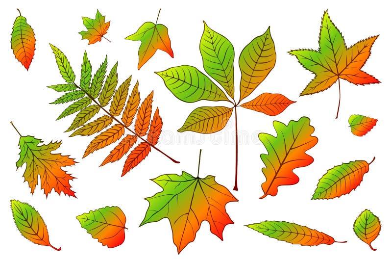 Ustawia inkasowych pięknych kolorowych jesień liście odizolowywających na białym tle r?wnie? zwr?ci? corel ilustracji wektora 10  ilustracji
