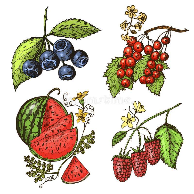 ustawia jagody malinka, czarna jagoda, denny buckthorn, czerwoni rodzynki, truskawka, agrest, arbuz, moroszka, pies wzrastał ilustracja wektor